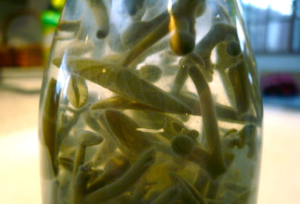 A close-up of bottled junsai buds