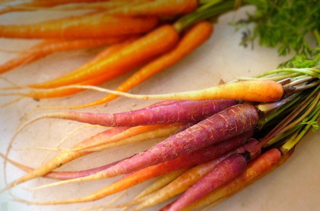 Fresh, carrots for sous vide