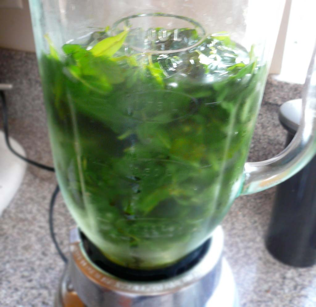 Blending the hyssop leaves with simple syrup