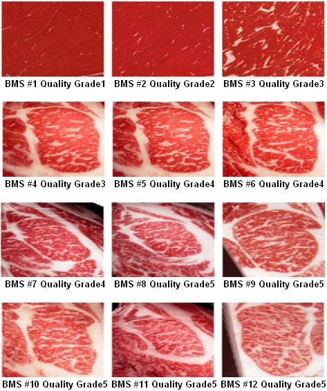 Beef Marbling Standards